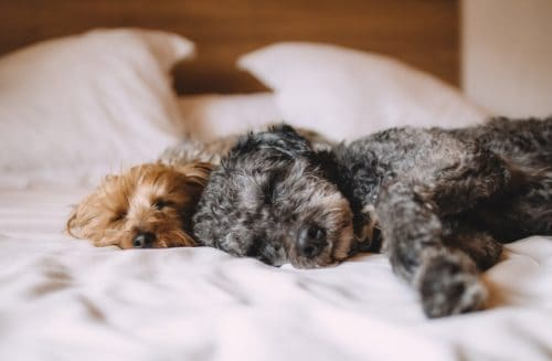 is it healthy to sleep with your dog