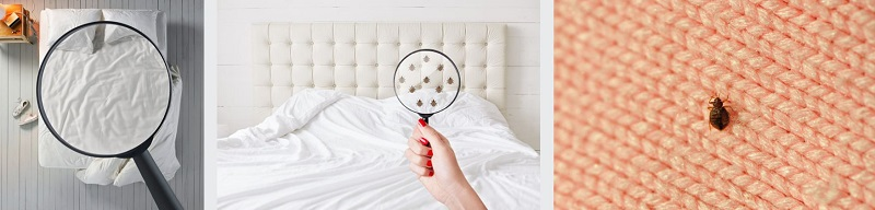 Visual inspection of bed bugs